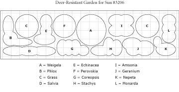 Deer-Resistant Garden for Sun from WhiteFlowerFarm.com