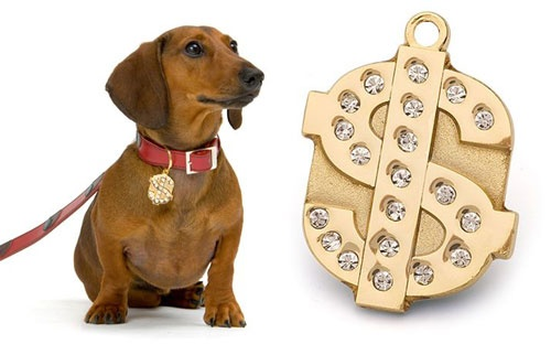 Gold and bling dollar sign ID tag for dogs and cats -
