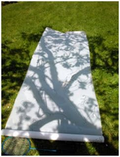 Nature and shadow- what if we take out the paints and paint in the lines….?
