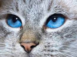 Risultati immagini per immagini particolari di colore azzurro