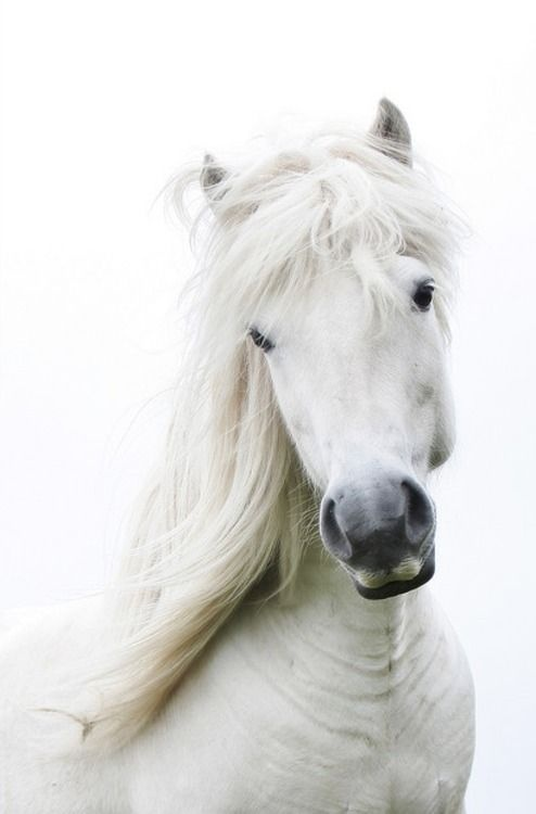 Pretty White Horse | Horses and cowboys | Pinterest