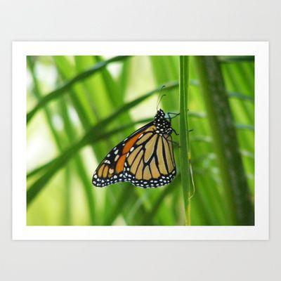 Butterfly 5 Art Print by Sheridan van Aken - $20.80