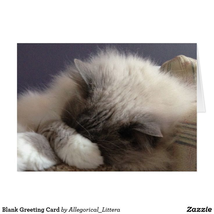 Ragdoll Cat sleeping | 17+ best ideas about Ragdoll Kittens For Sale on Pinterest | Siamese cats for sale, Ragdoll cats ...