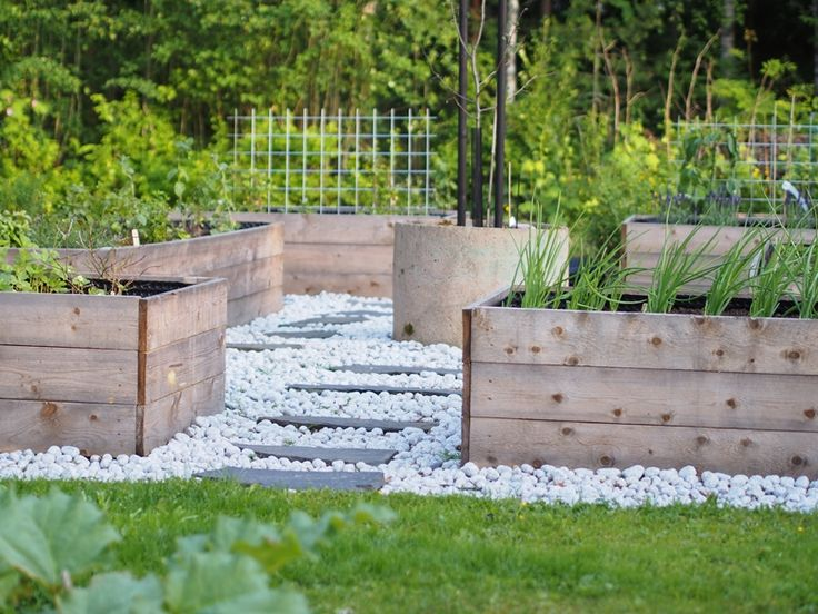 #vegetablegarden #kitchengarden