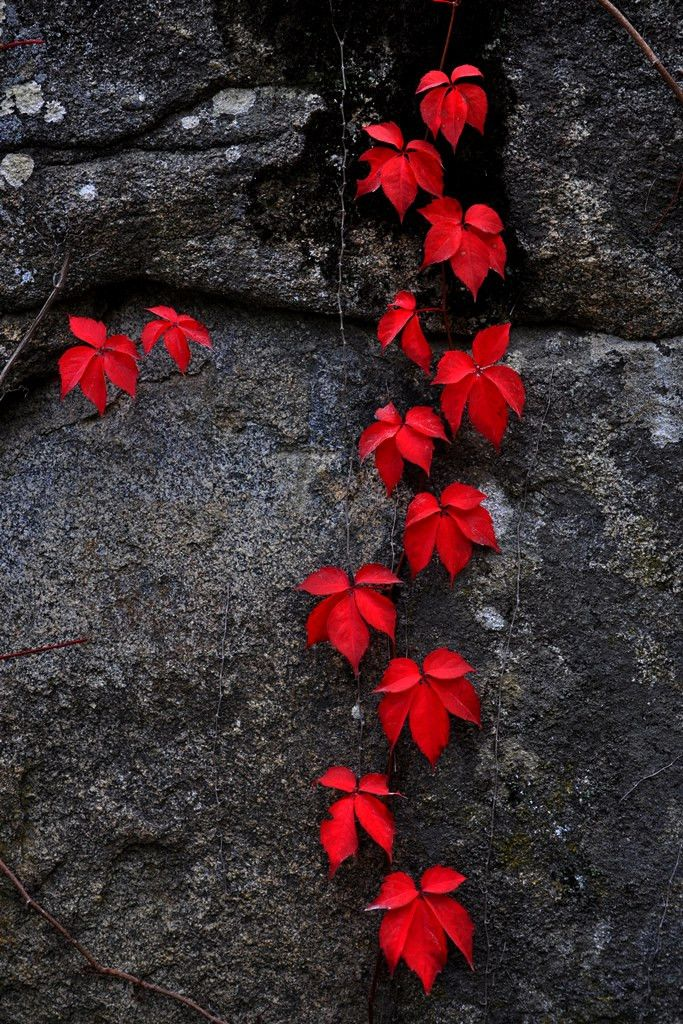 Photo The Elegance of Red... by Zeynep Kavalci on 500px