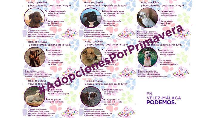 """Bajo el lema """"Adopciones por primavera"""" se quiere contribuir a buscar familia y dar una segunda oportunidad a mascotas víctimas de abandono y/o maltrato.   #adopcion #animales #campaña #compañia #podemos #velez-malaga"""