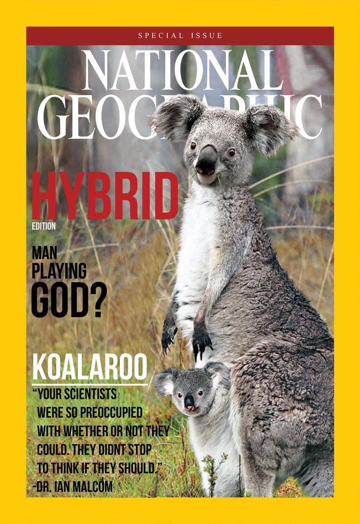 National Geographic magazine   - Special Edition - Cover designed by me and featuring an animal of my own photo manipulation, the Koalaroo.
