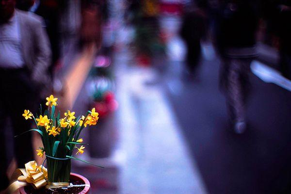Creative 50 mm lens - benefits and fantastic photos