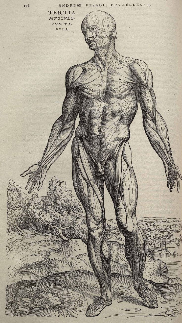 Page 178 of Andreas Vesalius' De corporis humani fabrica libri septem, featuring the illustrated