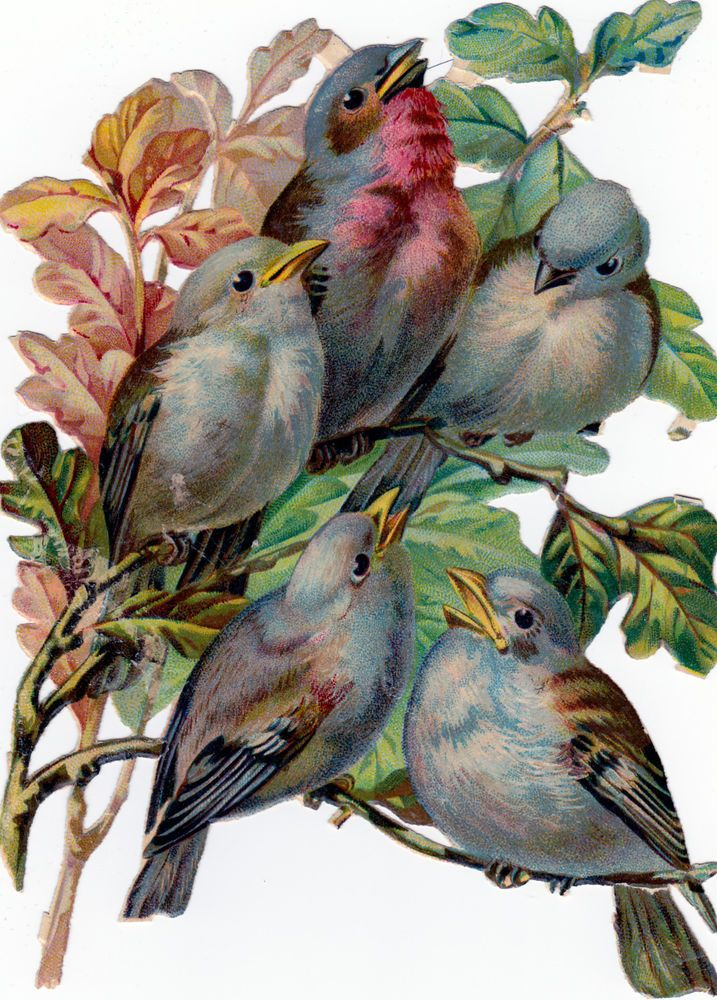 große alte  Oblate,  kein Nachdruck, ca. 1880, Vögel, ca. 17 cm
