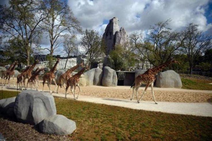 zoo-parc-vincennes