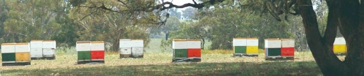 Starter kit - Bindaree Bee Supplies (Murrumbateman, near Canberra)