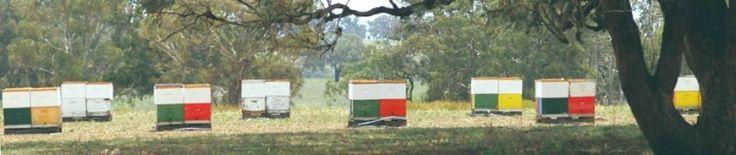 Starter kit - Bindaree Bee Supplies (Murrumbateman, near Canberra)