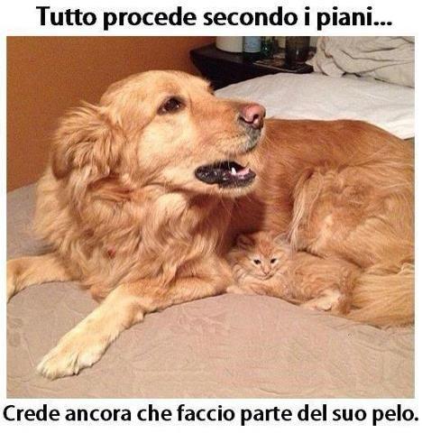 Che cucciolo ♥♥♥♥♥