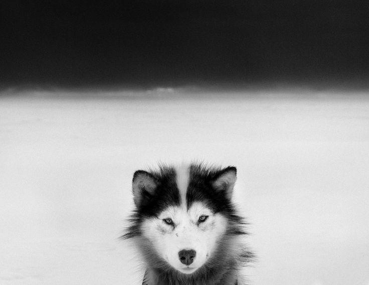 Ragnar Axelsson, dit Rax, est un photographe islandais ayant voyagé à travers l'arctique pendant presque 30 ans.Durant cette période, il a été témoin de nombreux changement de paysage, d'environnement mais également de mode de vie des Inuits qu'il a rencontré.C'est en photographiant des terres fragilisées par le réchauffement climatique qu'il ...