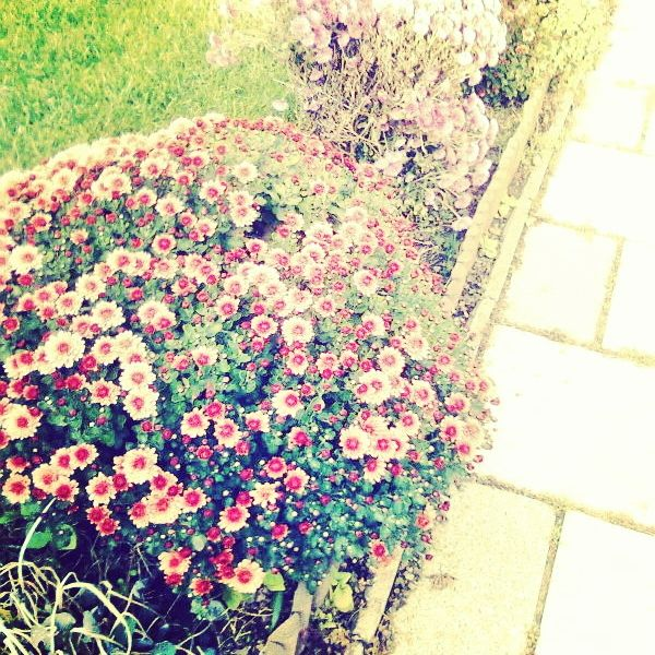 flowery bushes :)
