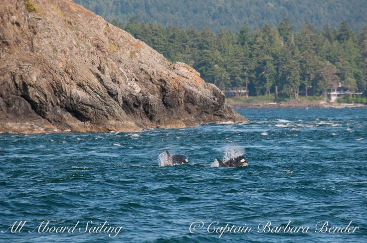 J50 Scarlet and nephew J52 Sonic  play near Kellet Bluff in May, 2016 | Barbara Bender photo
