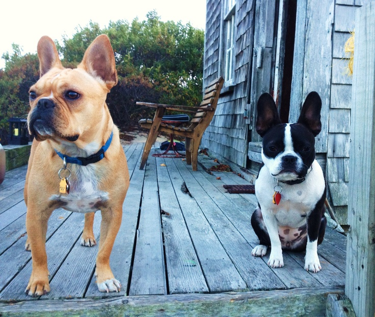 The Cute Frenchtons At Revere Guest House In Provincetown