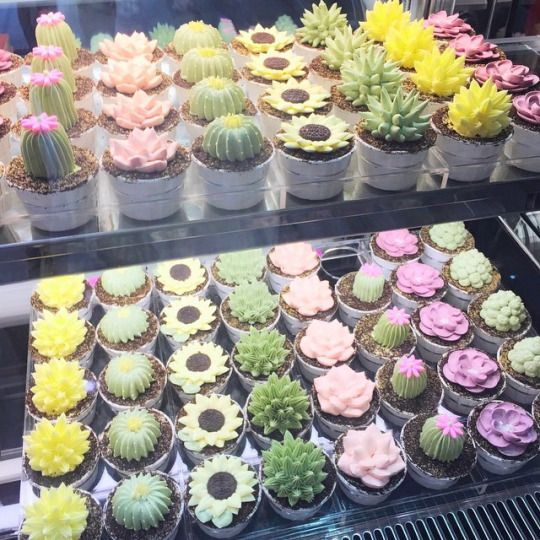You've reached The House of Unrecognized Talent - coffee-gal:   thecupcakemaniac:   Cacti Cupcakes  ...