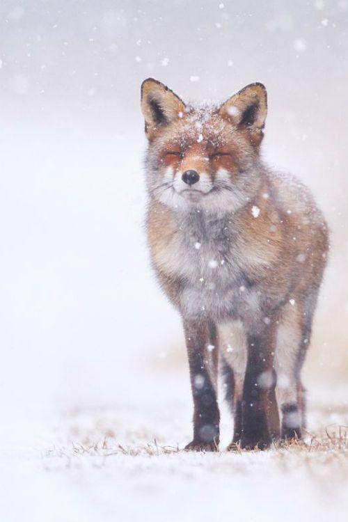 Winter wonderland ✿⊱╮