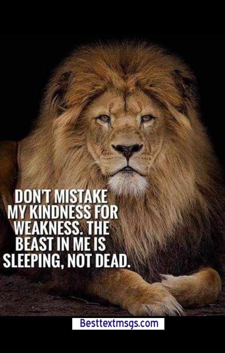Lion Quotes Images Free Download If Ever You Feel Like An Animal Among Men Be A Lion Criss Jam Lion Quotes Short Inspirational Quotes Super Funny Quotes