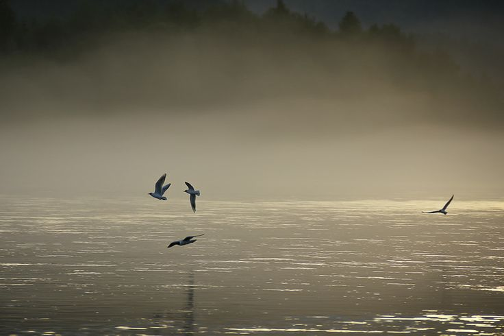 Birds in mist by Mikael Lindholm on 500px