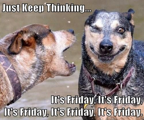 Happy Friday Funny Top: 71 Best Funny Friday Dogs Images On Pinterest