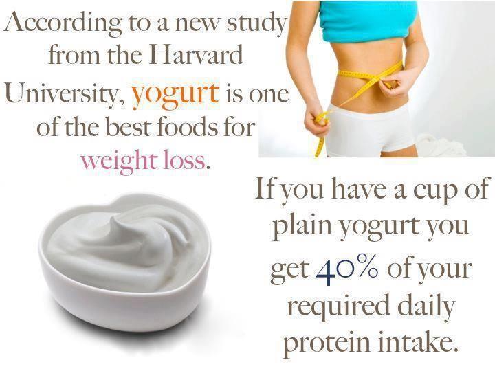 yogurt diets lose weight