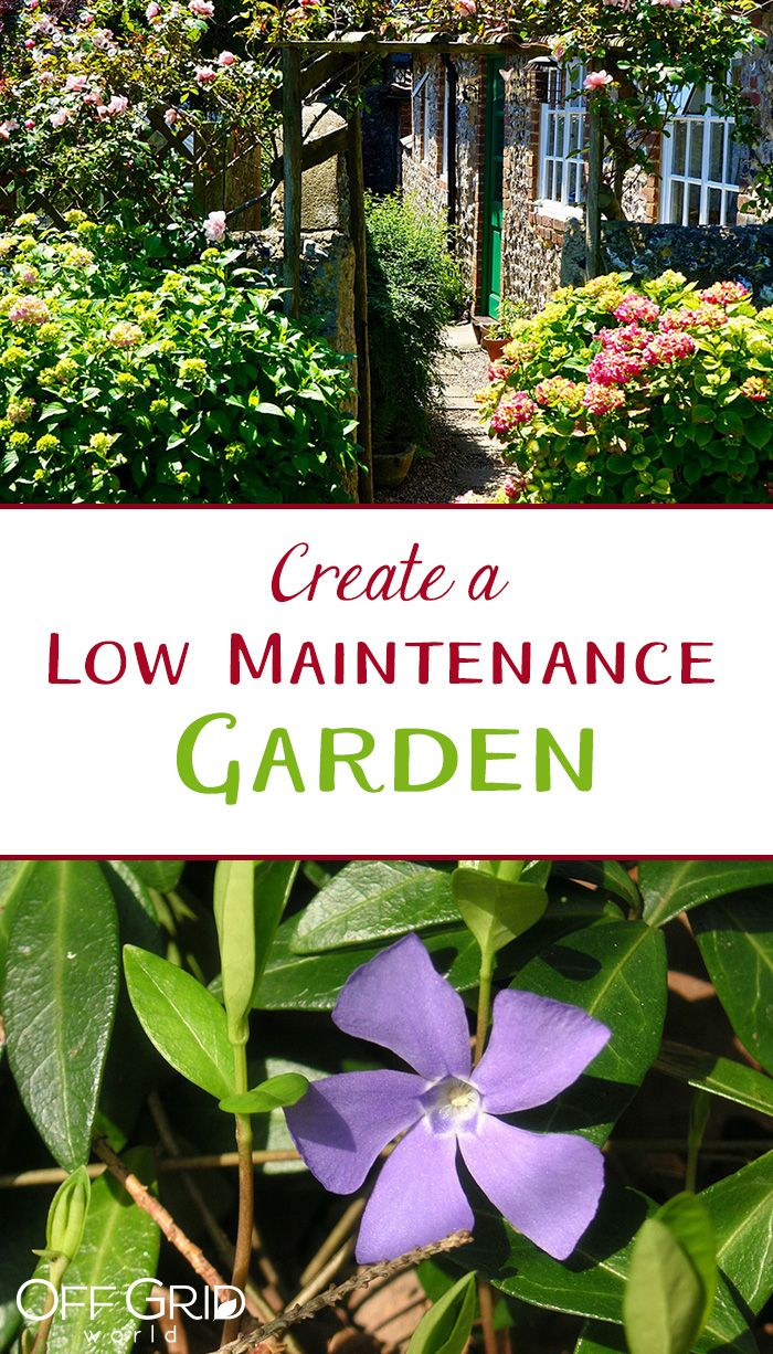 Low Maintenance Garden Design: Best 25+ Low Maintenance Garden Ideas On Pinterest
