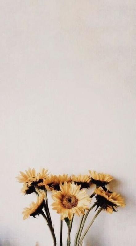 28 Trendy Pflanzen Hintergrund Tumblr