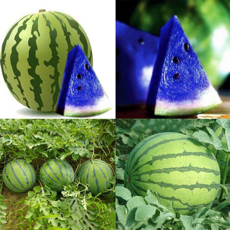 10pcs Rare New Variety Blue Watermelon Seeds Organic ...