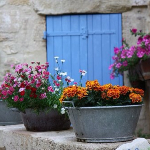 Galvanized Buckets As Planters