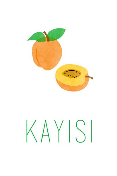 Kayısı İllustrasyonu- Apricot Illustration