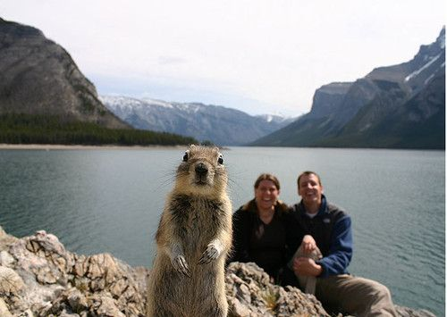 squirrel punked