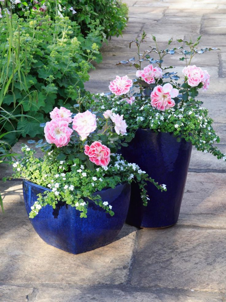 Potted Plants For Patio   Lowes Paint Colors Interior Check More At Http://