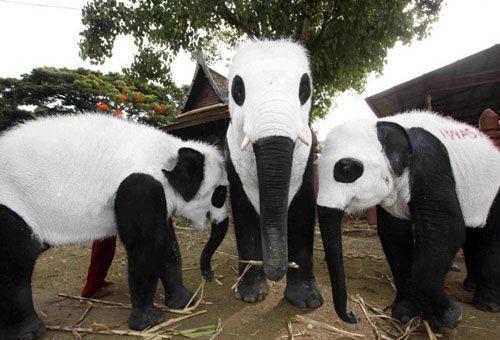 ...what!?!: Thai Elephants, Black White, Pandas Elephants, Funny Stuff, Favorite Animal, Funny Animal, Elephants Pandas, Elephants Paintings, Elephants Dresses