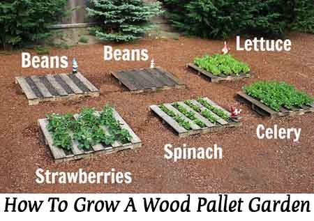 Green Green on Pinterest Container Garden Starting Seeds