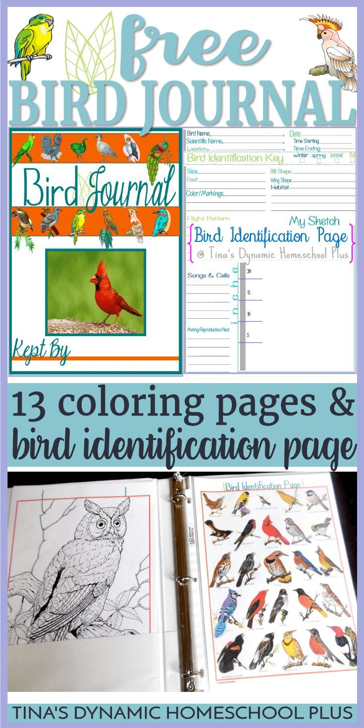 Free Bird Journal Coloring Identification Pages Birding