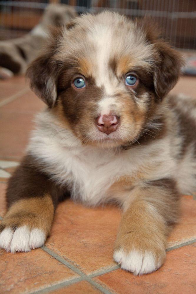 Schau' mich an und dann sage mir, daß du mich nicht mehr liebst!? – Deine blauen Augen machen mich so sentimental …! :o)