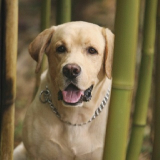 Vincent/lost: 43 Characters, Lost Tv, Movies, Forever Lost, Vincent Lost, Labrador, Favorite Tv Movie, Tv Movie Dogs, Island