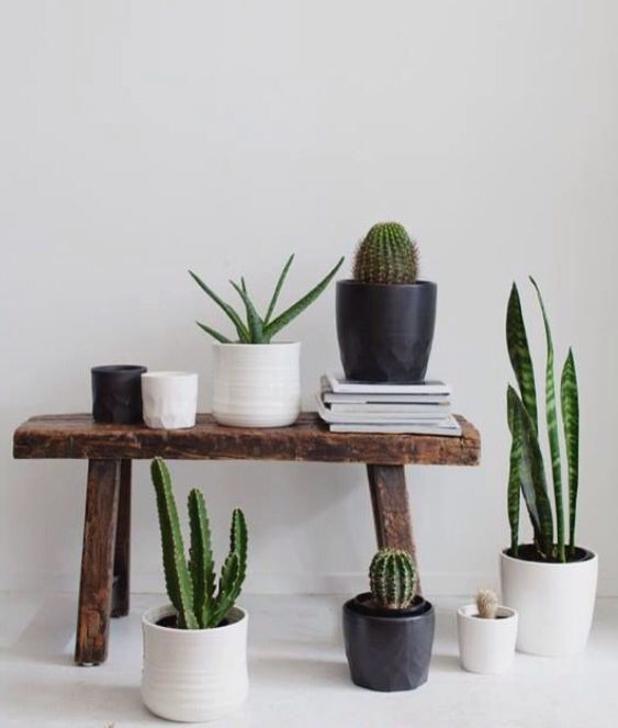 237 best Indoor Plants images on Pinterest