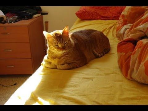 Check out this super cool time lapse video of a cat in a sunbeam! http://moderncat.com/articles/video-day-sunbathing-timelapse/67926