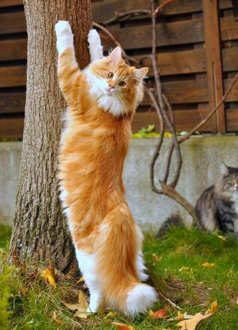 ONE TREE IS AS GOOD AS ANOTHER TO STRETCH OUT THOSE PAWS.......ccp