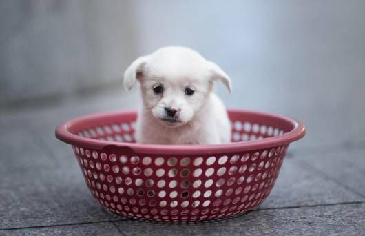 These companies give staff paid time off when they get a new puppy