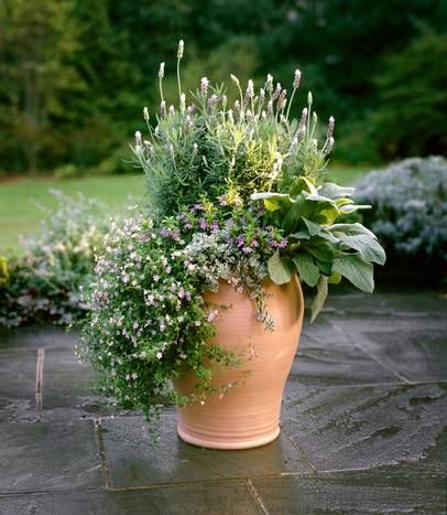 17 best images about potted plants on pinterest the secret fall containers and sun - P allen smith container gardens ...
