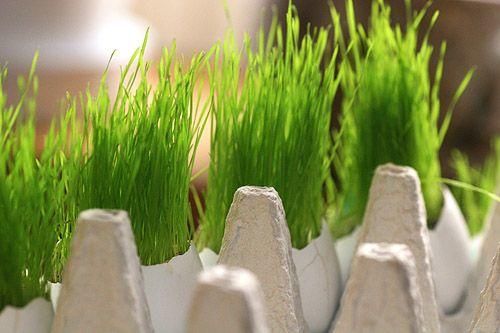 Så gräs i äggskal