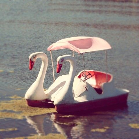 Swan Lake whimsical photo, so fun for a baby or child's room ~ Diem Design Photography on Etsy