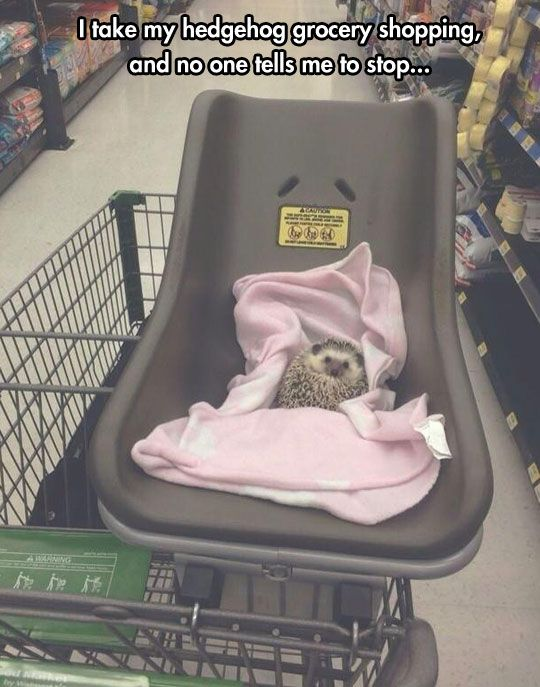 The Tough Hedgehog Life. I would totally take my hedgehog grocery shopping too if I had one!
