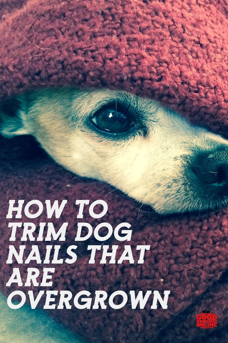 How to trim dog nails that are overgrown dog nails