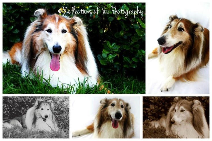 Recent pet shoot by me <3    http://www.facebook.com/ReflectionsofYouPhotography.OakFlats